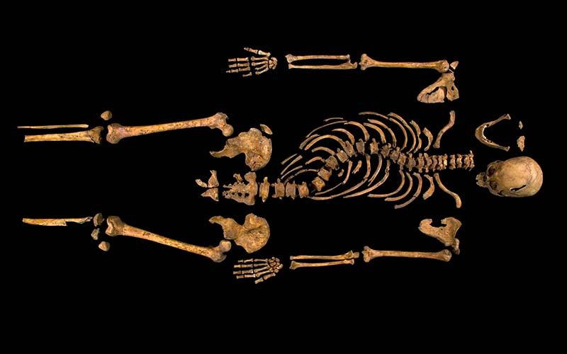 richard iii skeleton university of leicester
